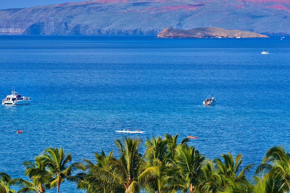Kayaking, SUP, Snorkeling, Sailing and more!